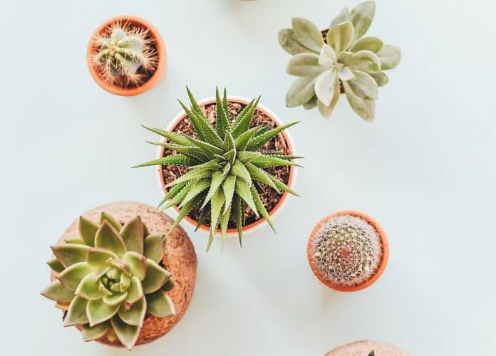 5 cactus à mettre dans votre intérieur