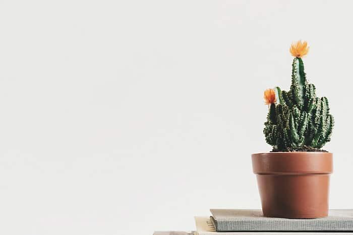 idee déco cactus