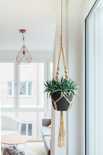 plantes originales 2