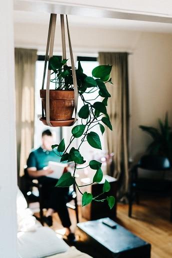 plantes originales 4