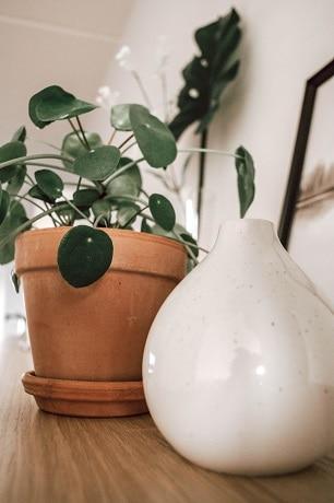 plantes originales 5