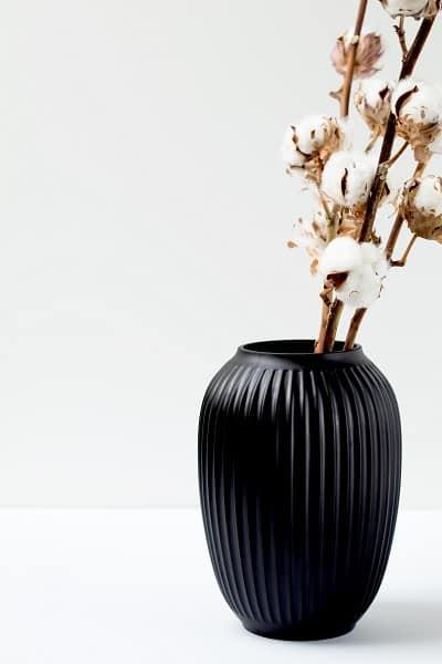 plantes originales 6